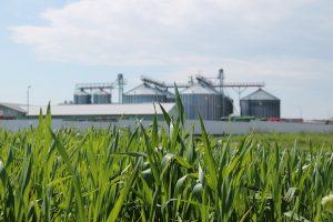 La AgranoLand se face agricultura ECO/BIO pentru producerea de cereale extrem de nutritive si conservarea solului.