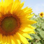 AgranoLand productia agricola ecologica Romania
